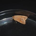 Fotos del muestreo de Mariposas y fauna nocturna