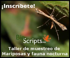 Mariposas nocturnas