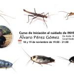 Curso de iniciación al cuidado de Invertebrados – 15€