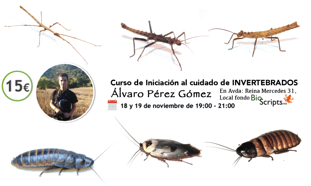 facebook_invertebrados4