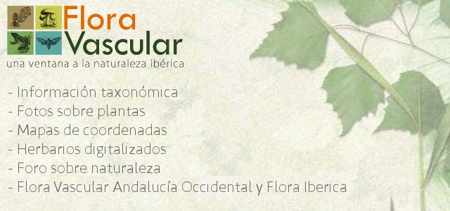 proyectos_flora