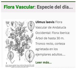 especie_fv