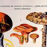 Láminas de Emilio Guinea del IES San Isidoro