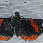 Vanessa atalanta, mariposas diurnas