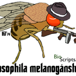 Camiseta Drosophila melanogánster