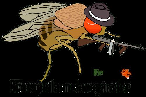 Camiseta drosophila melanogánster