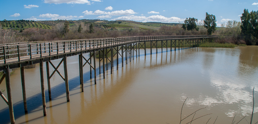Imagen ruta Corredor Verde del Guadiamar