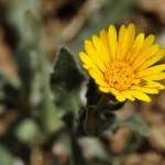 Imágenes en claves: mejoras en el Proyecto Flora Vasca