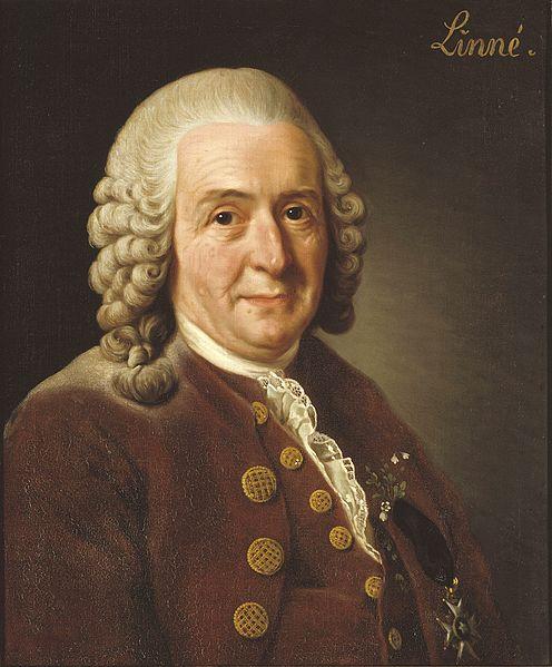 Retrato de Carl von Linné de nationalmuseum