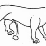 El lince en los bestiarios medievales