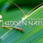 Presentamos el proyecto Hidden Nature