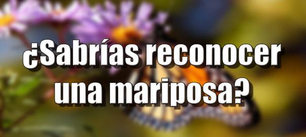 Canal Hidden Nature - Mariposa