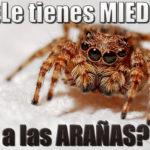 ¿Os dan miedo las arañas?