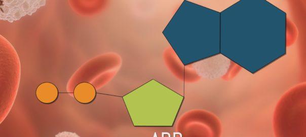 ADP - Adenosín difosfato