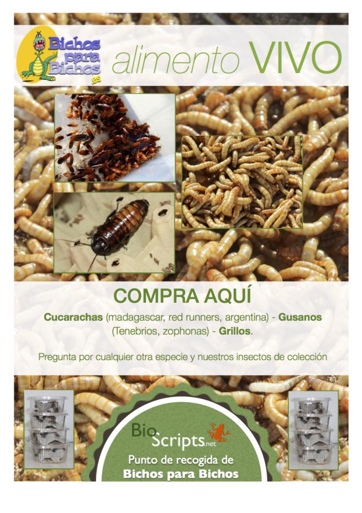 Punto de recogida de alimento vivo de bichos para bichos