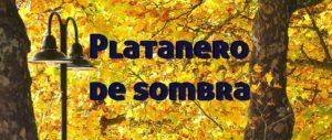 platanero entrada