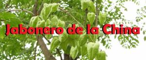 Jabonero