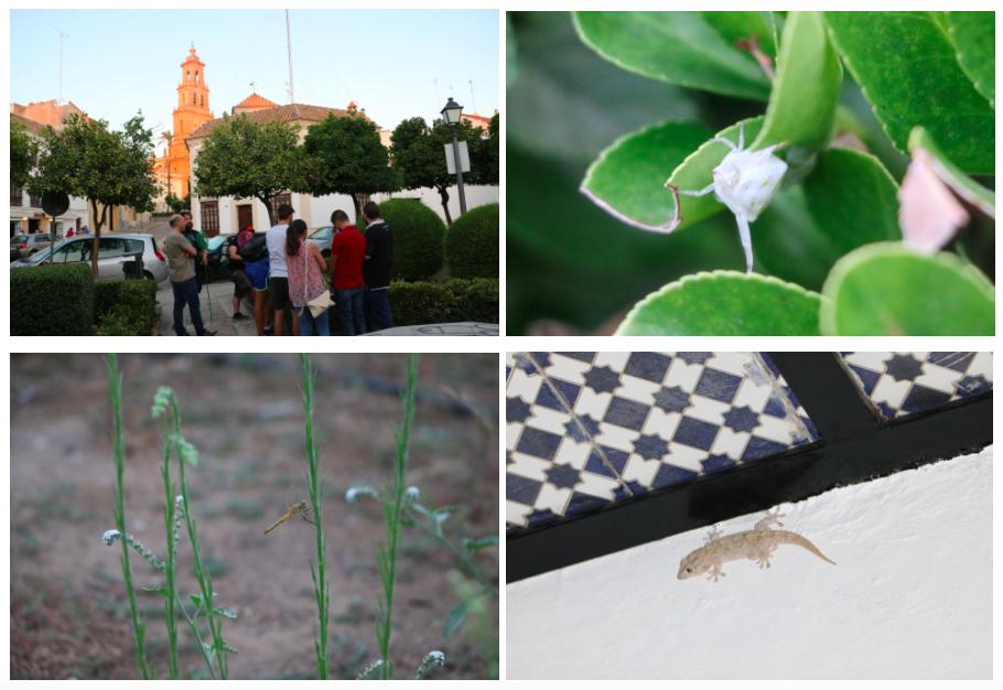 Dia 3 del Verano Verde