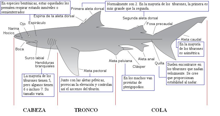 Zoowiki